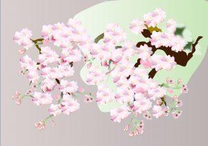 桜 生徒様